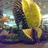 S'poreans react to 6-metre fake durian on display at Changi Airport