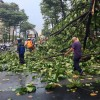 Tree commits suicide to protect family from hailstorm