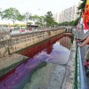 S'poreans react to Jurong West canal turning red