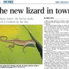 Native lizards upset foreign talent lizards get paid more to sit on leaves