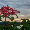 PM Lee's Facebook photo prompts appreciation for flowers