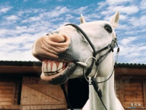 A laughing horse.