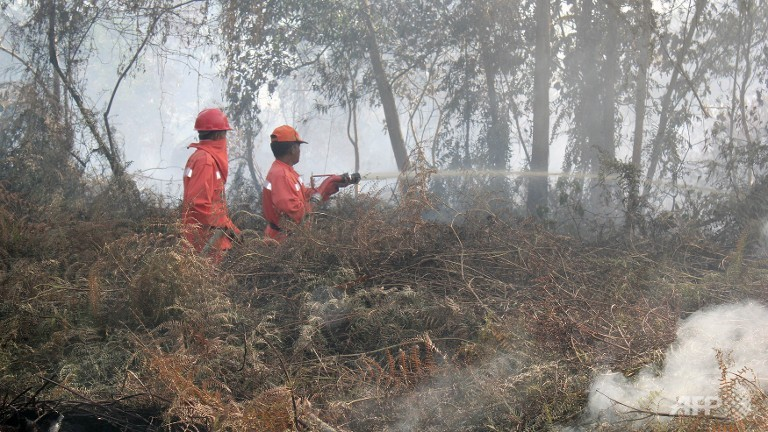 In the meantime, Indonesian firefighters battle forest fires in Sumatra island while Singapore firefighters wait to get deployed. (AFP PHOTO / HAFIZ ALFARISSI)