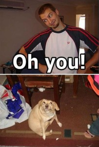 oh-you-dog